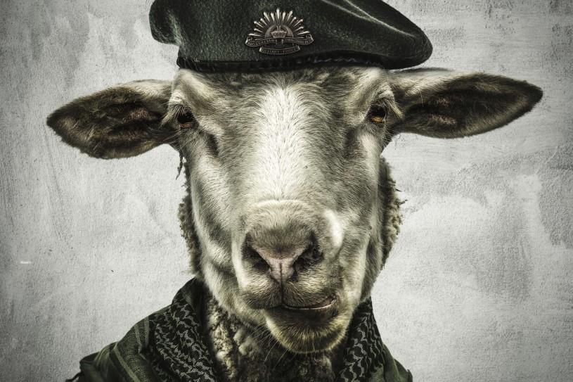 Emre Yusufi War Sheep Portrait Mix Media 50x50 Aluminum and Glass 2016